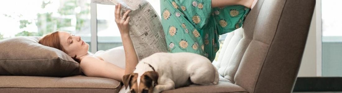 Да предпазим любимият диван от четириногите любимци